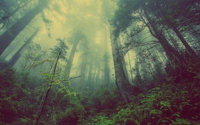 Quelle est l'importance des plantes pour l'homme et pour l'environnement ?