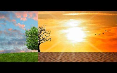 La reforestation, une activité très recommandée pour réduire davantage les risques du réchauffement climatique